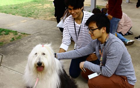 Therapy dogs main attraction during anti-stress week