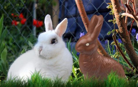 Staffer urges parents to give chocolate bunnies for Easter rather than real ones