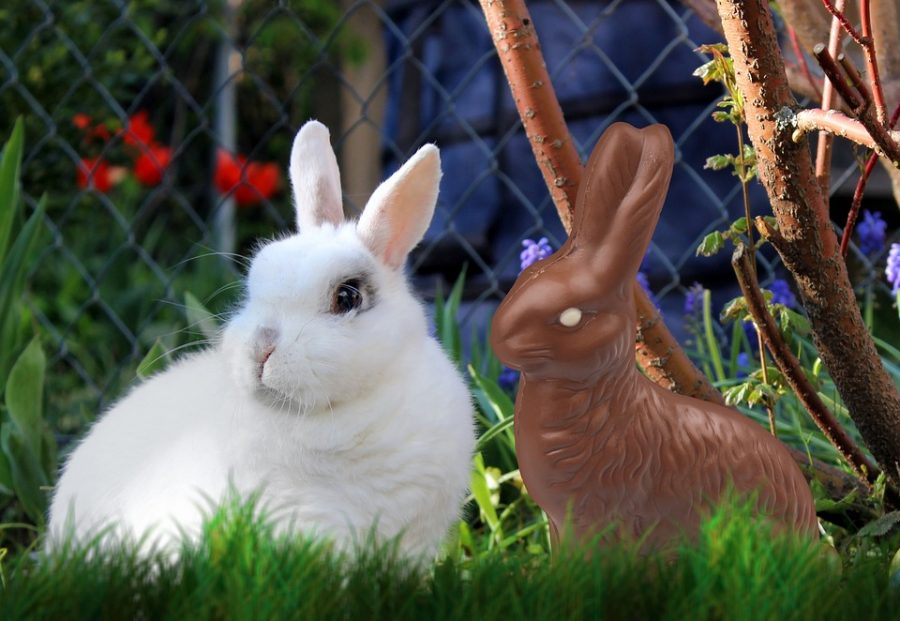 Although+rabbits+can+make+delightful+companions%2C+they%E2%80%99re+not+easy-care+pets.+Rabbits+are+the+third+most+popular+pet+in+America%2C+after+cats+and+dogs%2C+according+to+the+Humane+Society+of+the+United+States%E2%80%94and+the+third+most+abandoned.+